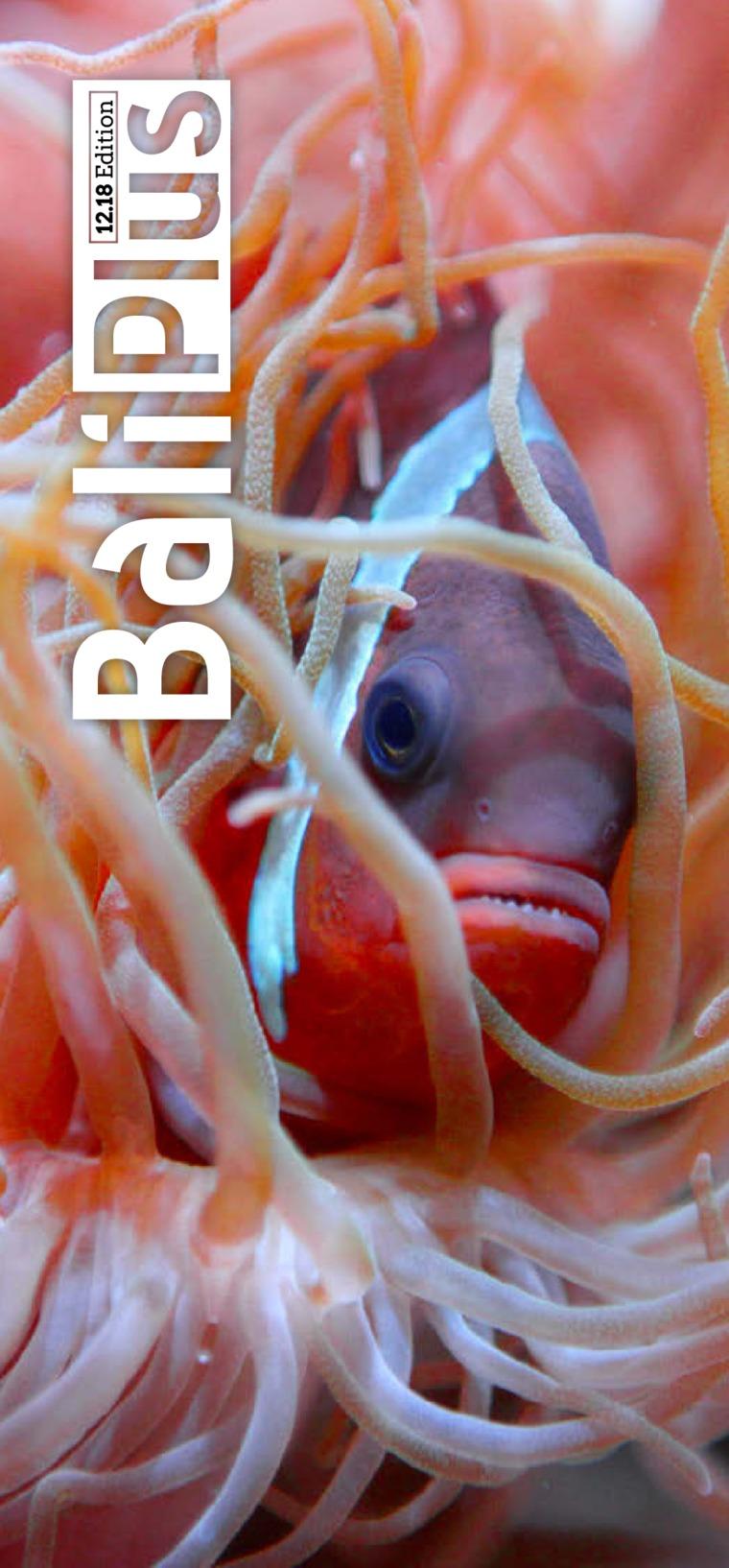 BALI PLUS Digital Magazine January 2019